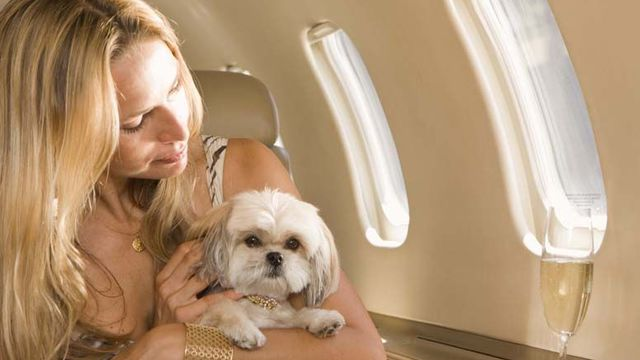 Animal en avion pour aller aux USA